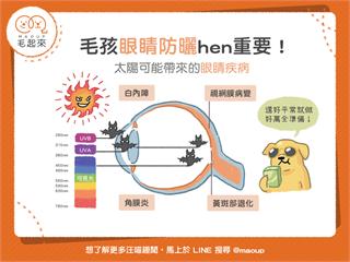 【汪喵康健】為什麼毛孩眼睛要防曬?太陽可能造成的眼睛疾病!