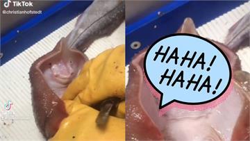 漁夫輕搔魟魚寶寶 牠下秒露「燦爛微笑」網喊:太療癒