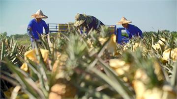以「國家隊」之姿出擊 臺灣農業挺過疫情、化危機為轉機!|田下大小事|EP5
