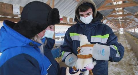 俄國再度搶先全球 推出首支動物用新冠疫苗