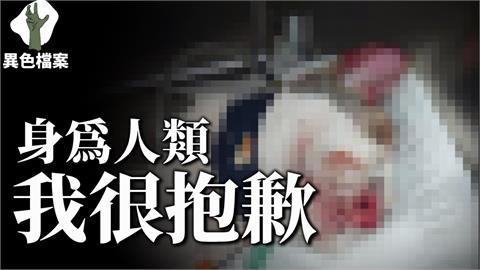 蘆洲男為求復合竟用「滾水淋貓」!搶救11天仍不治 他盼:不該是一時話題