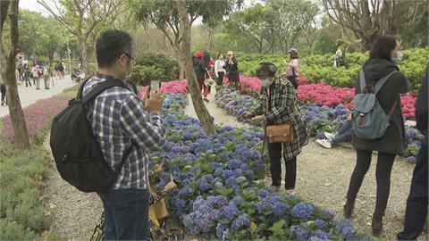 杜鵑花季倒數10天吸人潮!大安森林公園繡球花、薰衣草也盛開
