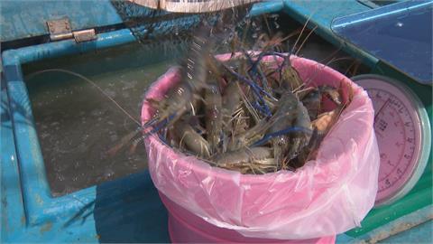 釣蝦場停業 民排買隊買救蝦農