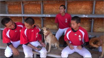 咬棒球、追箭...23隻校狗生活拍成紀錄片!微電影競賽萌奪冠