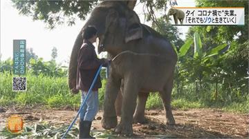疫情嚴峻遊客銳減 泰國大象「失業」轉行當網紅