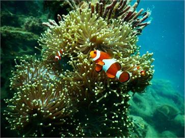 保護珊瑚 台東縣府呼籲遊客避免使用防曬乳