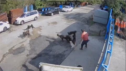 鄰居養八大型犬不沒拴鍊、不戴嘴套 攻擊事件頻傳 附近工廠人員出入 人心惶惶