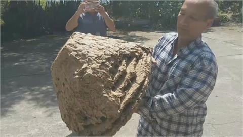 家中藏1公尺巨型蜂巢 24年除蟲專家見75000隻黃蜂驚:沒見過!