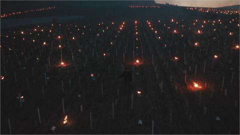 春寒-5度恐凍傷葡萄藤 法國農民點蠟燭除霜
