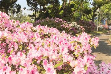 台北杜鵑花季活動開跑 創造美食聯合國
