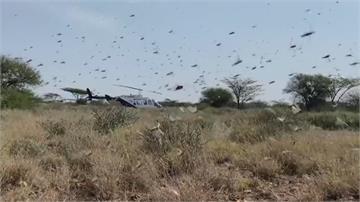 肯亞面臨70年最嚴重蝗災 聯合國農糧組織「超前部署」撲殺幼蟲