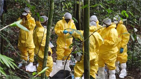 全球/超前部署防下一波疫情  「病毒獵人」深山抓蝙蝠