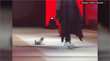 土耳其貓咪闖進伸展台 搶走模特兒風采