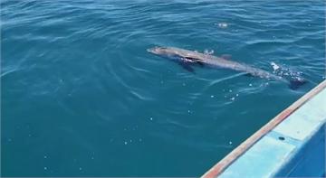 日貨輪漏油事件後 模里西斯傳出至少40隻海豚亡