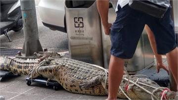 不滿《動保法》影響生計 男子牽鱷魚到行政院陳情