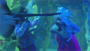 韓國最大水族箱迎新年 潛水員穿韓服特別演出