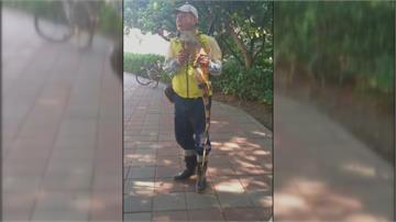 捉到了!「小恐龍」曬太陽引熱議1.8公尺綠鬣蜥 將安樂死處理