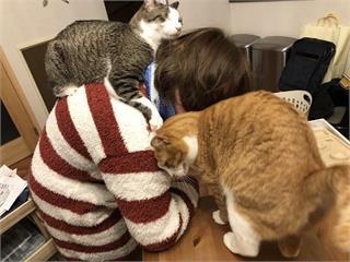 飼主才懂《在家工作的辛酸》在外對抗肺炎病毒,回家防範寵物搗亂...(苦笑)
