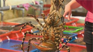 龍蝦吃到飽竟是「蝦蛄」?價格差很大專家曝「分辨撇步」秒懂龍蝦、海戰車!