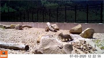 保護牠們! 猶他州設「動物天橋」 安全穿越公路