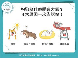 【狗狗小學堂】狗狗為什麼一直喘氣?4大原因一次告訴你! 寵物愛很大