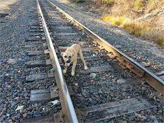 真的超級可惡《被綁在鐵軌上的狗狗》結果遇到超天使飼主♥