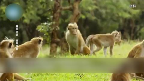 北京傳首例人染猴類泡疹病毒 5月已病逝