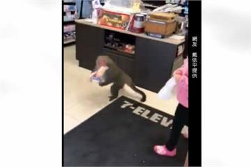 囂張獼猴搶超商 抓3條大亨堡麵包落跑