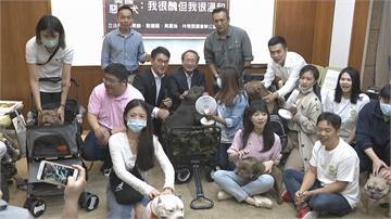 具攻擊性大型犬列禁養名單 飼主陳情爭權益農委會允再研議