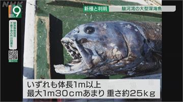 日本駿河灣新魚種「橫綱黑口魚」吞得下體積比自己還大的魚