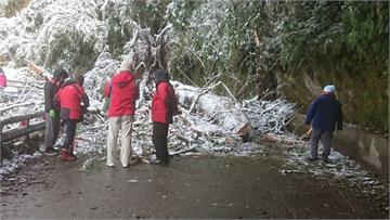 快新聞/追雪族留意! 氣溫回暖高山雪融 南橫公路156k路樹倒塌