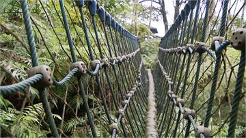 倒三角型吊橋走過嗎?來一趟土城油桐花公園