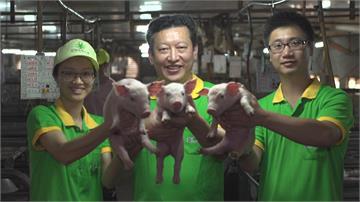 翻轉傳統產業創生機 台灣豬農蓋智慧化豬舍