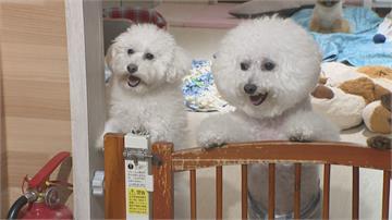 「好飼主、好社區」公寓大廈禁養寵物 立委籲廢規定護權益 住戶看法兩極