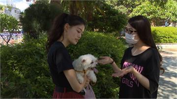 防疫解禁打工機會多 「貓狗工具人」單次賺1500元