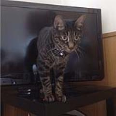 《貓咪與電視的奇蹟角度》貓咪從電視機裡爬出來啦 ❤