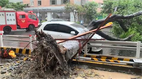 快新聞/北市信義區2路樹倒塌1車慘被砸  基隆路南往北線道一度封閉