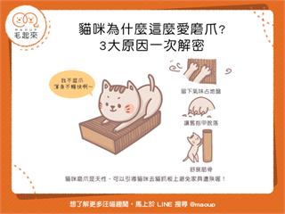 【貓貓行為學】貓咪為什麼那麼愛磨爪?3大原因一次解密!|寵物愛很大