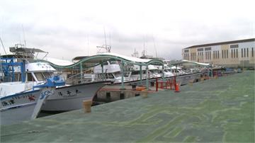 武漢肺炎衝擊釀遊客荒!賞鯨船春節至今幾乎停航