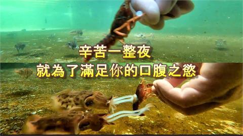 海中獵食者!花枝見螯蝦鋒利雙夾 竟聰明靠 「這1招」捕捉