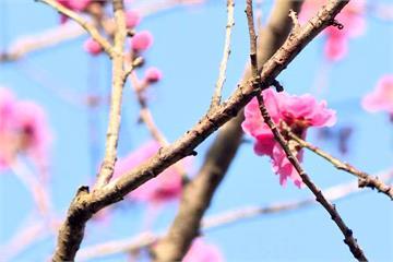 交通方便、自然景觀豐富 「北關東」遊日新選擇