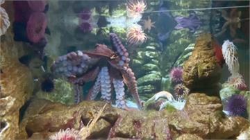 人跟章魚能變麻吉?這間水族館一炮而紅