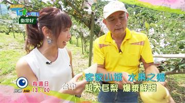《GoGo Taiwan》跟著Windy到東勢 體驗樟腦文化 探訪水果之鄉