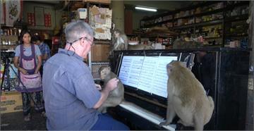 老孫也想聽音樂!旅泰鋼琴家給猴子的獨奏會