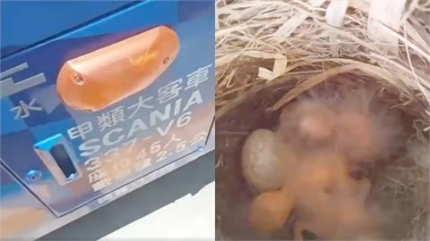 遊覽車停太久…竟出現「鳥巢」!網見幼鳥孵化嘆:哭笑不得