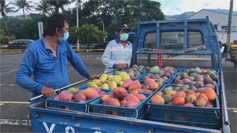 台南今年芒果產量增2成! 農委收購中.小規格每公斤10元