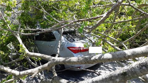 四樓高老樹被風吹倒壓到車 婦困車裡求救