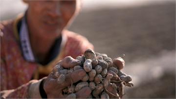 【預告】虎霸王ㄟ在地深情 致力推廣優質國產雜糧|土地的微笑