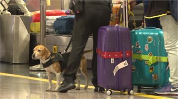防堵非洲豬瘟!重點航班手提行李加強抽檢