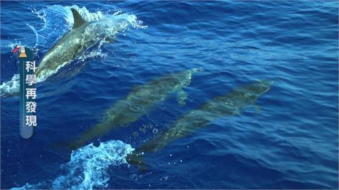 中華白海豚生存危機 盼與離岸風電共存